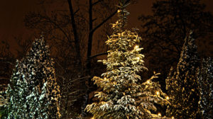 glowing_christmas_tree_lights_in_the_winter_night